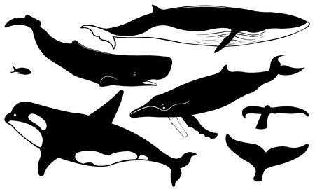 Illustration for set of different whales isolated on white - Royalty Free Image