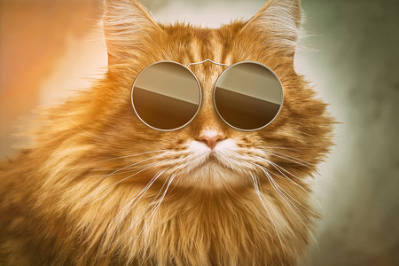 Photo pour Cool Cat - image libre de droit