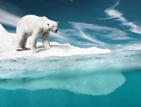 Photo pour Polar Bear - image libre de droit