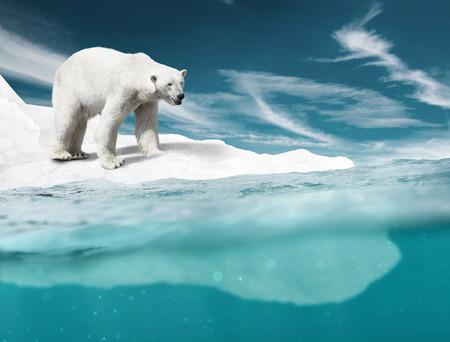 Photo for Polar Bear - Royalty Free Image