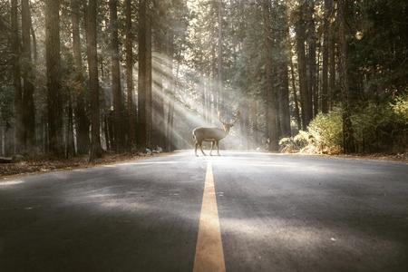 Foto de Deer standing in the middel of the road - Imagen libre de derechos