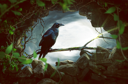 Photo for Raven sitting on a branch - Royalty Free Image