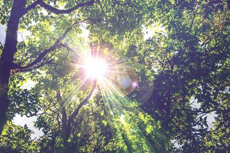 Photo for Background survive natural light shining through the trees in the woods, light shines through the trees. - Royalty Free Image