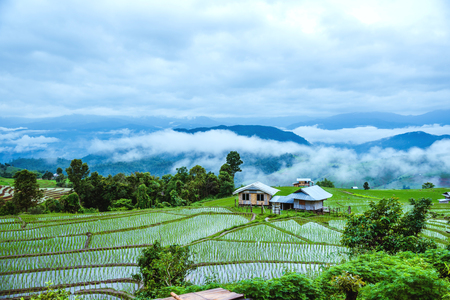 Foto de Travel Rainy Season landscape of Rice Terraces at Ban Papongpieng Chiangmai Thailand - Imagen libre de derechos