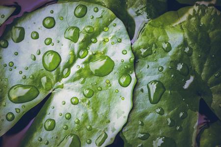 Foto de Natural background rain drops on the green leaf - Imagen libre de derechos