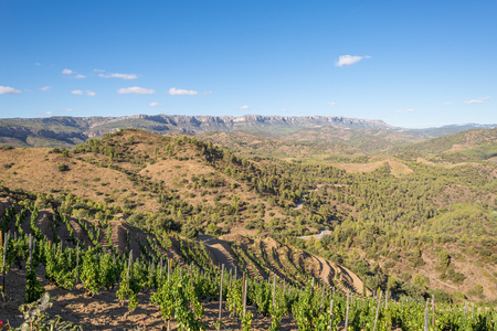 Photo pour The Comarca Priory is a famous wine growing area where the prestigious Wine of the Priorat and Montsant is produced. Wine has been cultivated here since the 12th century - image libre de droit