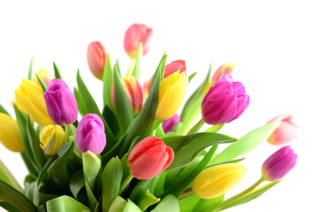 Photo for Bunch of tulips on white background - Royalty Free Image