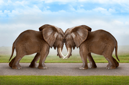 Photo for test of strength concept elephants pushing against each other - Royalty Free Image