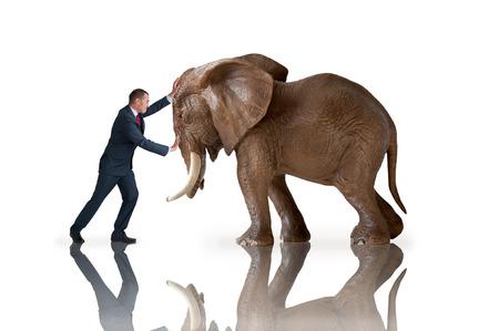 Foto de test of strength concept businessman pushing against an elephant - Imagen libre de derechos