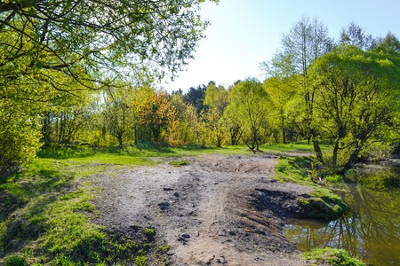 Photo for The path passes in the forest near the lake. Early morning. Spring. Russia - Royalty Free Image