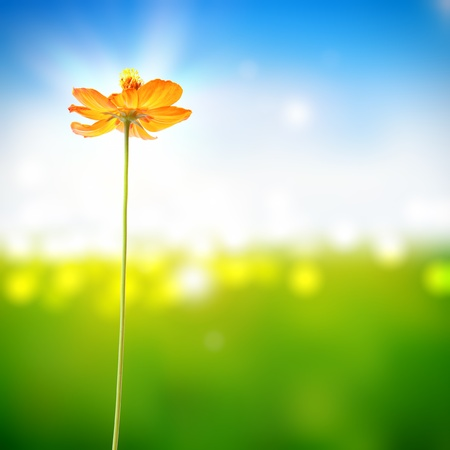 Photo for yellow flower on bokeh sunny background - Royalty Free Image