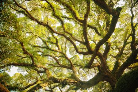 Photo pour Ancient banyan tree - image libre de droit