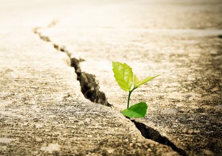 Foto de Plant grow on street , Ecology concept - Imagen libre de derechos