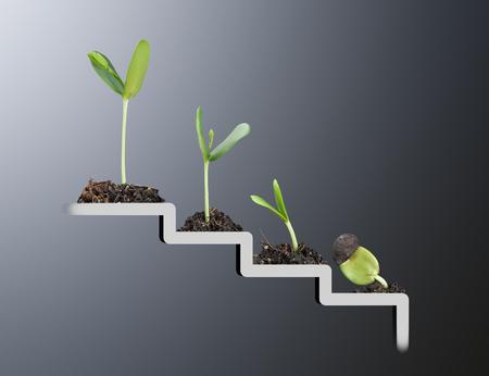 Foto de Plant on staircase , growth , development concept - Imagen libre de derechos