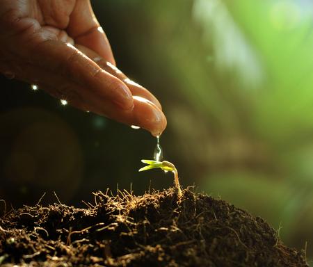Foto de Hand watering to small  plant in the morning - Imagen libre de derechos