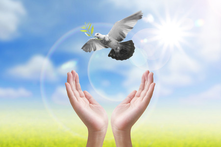 Photo for Hand releasing a bird into the air , all concept , peace and spirituality - Royalty Free Image