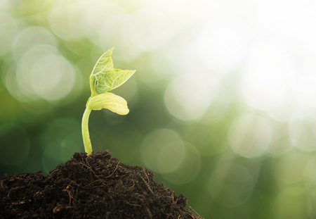 Photo pour Young plant growing in the morning light and green bokeh background - image libre de droit