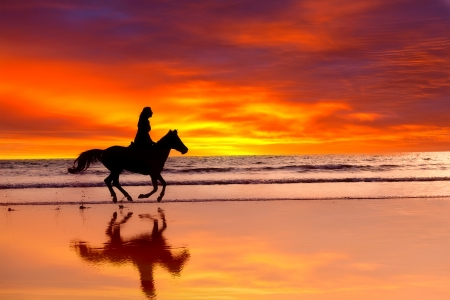 Silhouette of the girl skipping on a horse on an ocean coast on a sunset mural