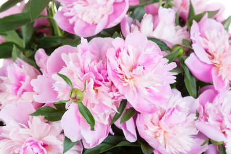Photo for Bouquet of pink peonies - Royalty Free Image