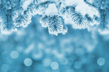 Foto de Background with snow-covered fir branches - Imagen libre de derechos