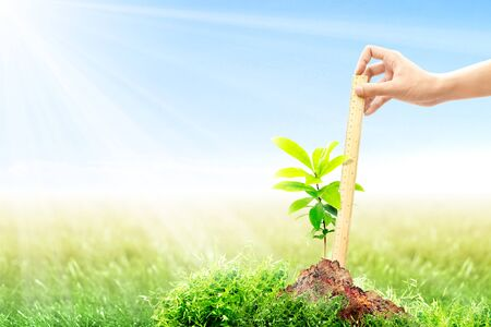 Photo pour Female hand with a ruler measuring her growing plant height on fertile soil in meadow with sunlight and blue sky background. Earth day concept - image libre de droit