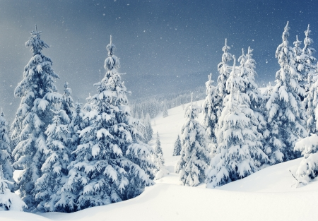 Beautiful winter landscape with snow covered trees mural