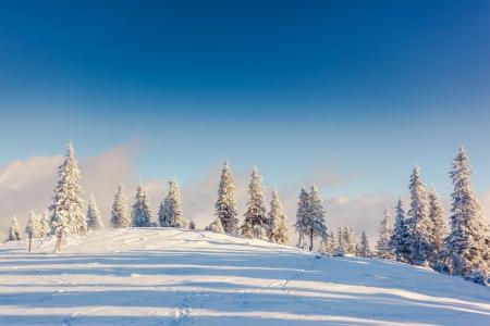 Foto de Fantastic winter landscape. Blue sky. Carpathian, Ukraine, Europe. Beauty world.  - Imagen libre de derechos