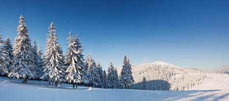 Foto de A frosty and sunny day is in mountains - Imagen libre de derechos