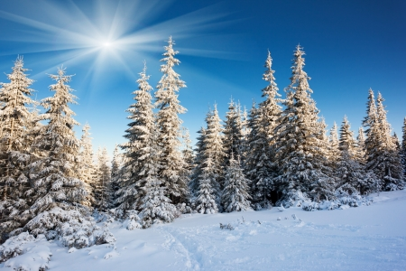 Photo for A frosty and sunny day is in mountains - Royalty Free Image