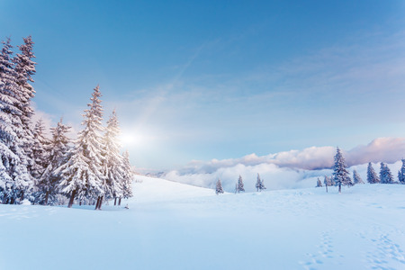 Photo for Fantastic winter landscape. Blue sky. Carpathian, Ukraine, Europe. Beauty world.  - Royalty Free Image