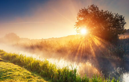 Foto de Fantastic foggy river with fresh green grass in the sunlight. Sun beams through tree. Dramatic colorful scenery. Seret river, Ternopil. Ukraine, Europe. Beauty world. - Imagen libre de derechos