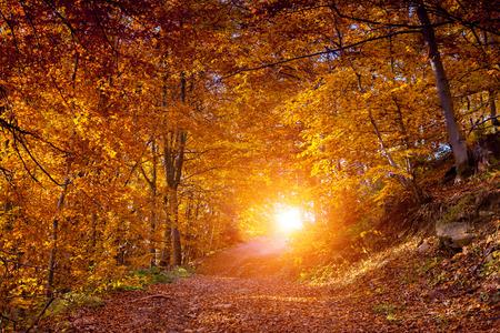Photo pour Majestic landscape with autumn leaves in forest. Carpathian, Ukraine, Europe. Beauty world. Retro filtered. Toning effect. - image libre de droit