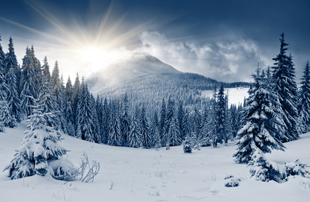 Foto de Beautiful winter landscape with snow covered trees - Imagen libre de derechos