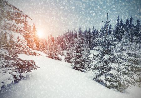 Foto de Majestic winter landscape glowing by sunlight. Dramatic wintry scene. Carpathian, Ukraine - Imagen libre de derechos