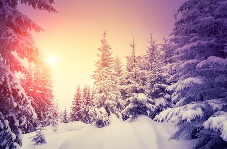 Photo pour Fantastic landscape glowing by sunlight. Dramatic wintry scene. Natural park. Carpathian, Ukraine, Europe. Beauty world. Retro style filter.  - image libre de droit