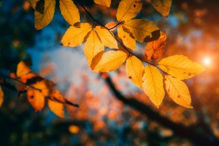 Foto de Majestic colorful forest with sunny beams. Natural park. Dramatic morning scene. Red autumn leaves. Carpathians, Ukraine, Europe. Beauty world. - Imagen libre de derechos