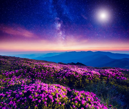 Photo pour Great view of the magic pink rhododendron flowers on the hill. Dramatic and fantastic scene. Carpathian, Ukraine - image libre de droit
