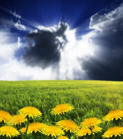 Photo pour summer meadow and the beautiful blue sky - image libre de droit