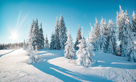 Foto de Majestic winter trees glowing by sunlight. Picturesque and gorgeous wintry scene. Location place Carpathian national park, Ukraine, Europe. Alps ski resort. Beauty world. Blue toning. Happy New Year! - Imagen libre de derechos