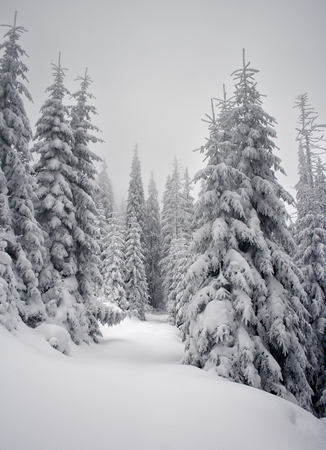 Photo pour Winter trees in mountains covered with fresh snow - image libre de droit