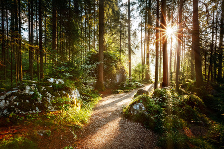 Photo pour Magical scenic and pathway through woods in the morning sun. Dramatic scene and picturesque picture. Wonderful natural background. Location place Germany Alps, Europe. Explore the world's beauty. - image libre de droit