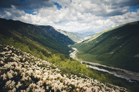 Photo pour Alpine meadows with rhododendron flowers. Location Svaneti, Georgia country, Europe. Main Caucasian ridge. Scenic image of wild area. Discover the beauty of earth. Excellent wallpapers. Moody picture - image libre de droit