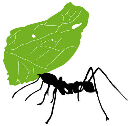 Illustration for Leaf cutter ant - Royalty Free Image