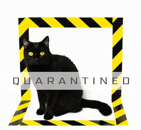 Foto de Black cat isolated with black and yellow stripy signal tape. Conceptual image of dangerous animal on white background. - Imagen libre de derechos