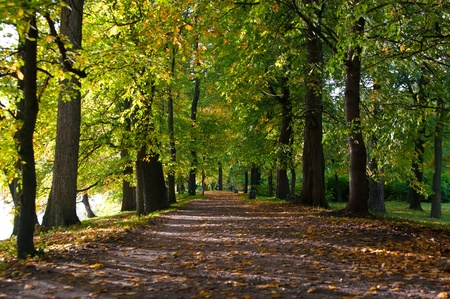 Beautiful autumn road with leaves in park