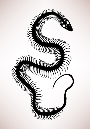 Snake Bone Skeleton
