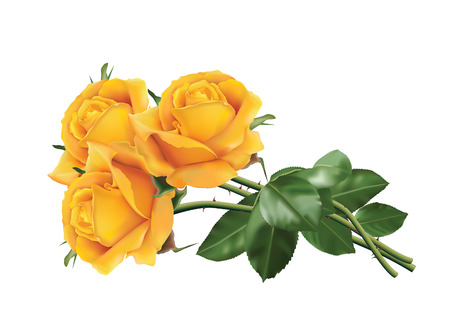 Ilustración de Three beautiful yellow roses isolated on the white background. - Imagen libre de derechos