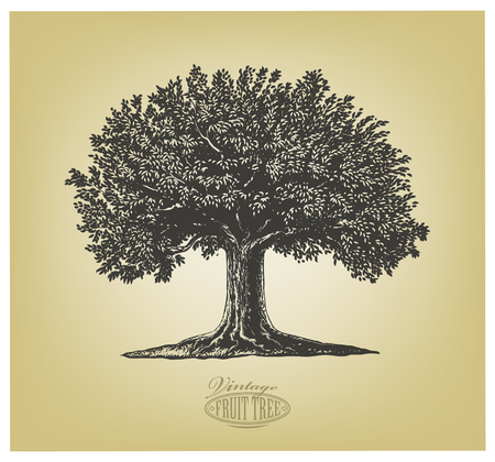 Illustration pour Vector illustration of a fruit tree in vintage engraving style. Isolated Group. - image libre de droit