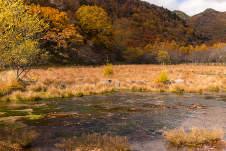 Photo for Autumn forest and marsh - Royalty Free Image