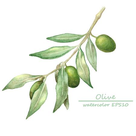 Illustration pour watercolor olive branch card. hand drawn illustration - image libre de droit